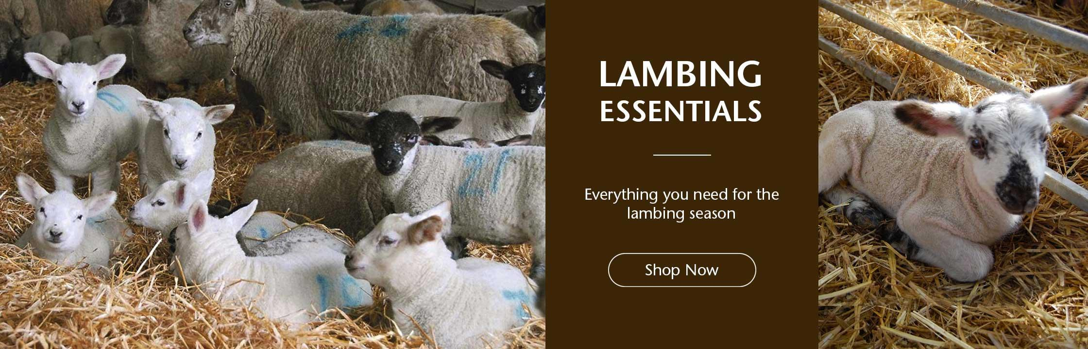 Lambing Essentials