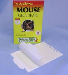 Big Cheese Mouse Glue Trap image